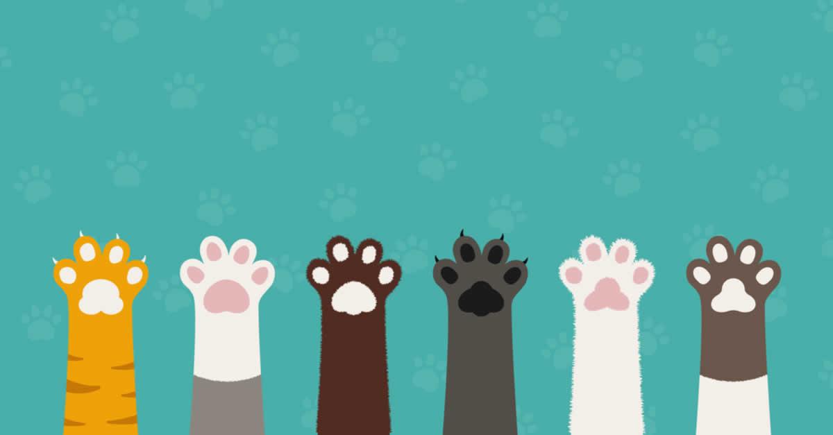 ネム(NEM/XEM)で保護猫活動をおこなう「NEM猫プロジェクト」が活動開始